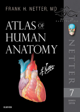 Atlas of Human Anatomy Netter Basic Science 2018 کتاب اطلس آناتومی نتر